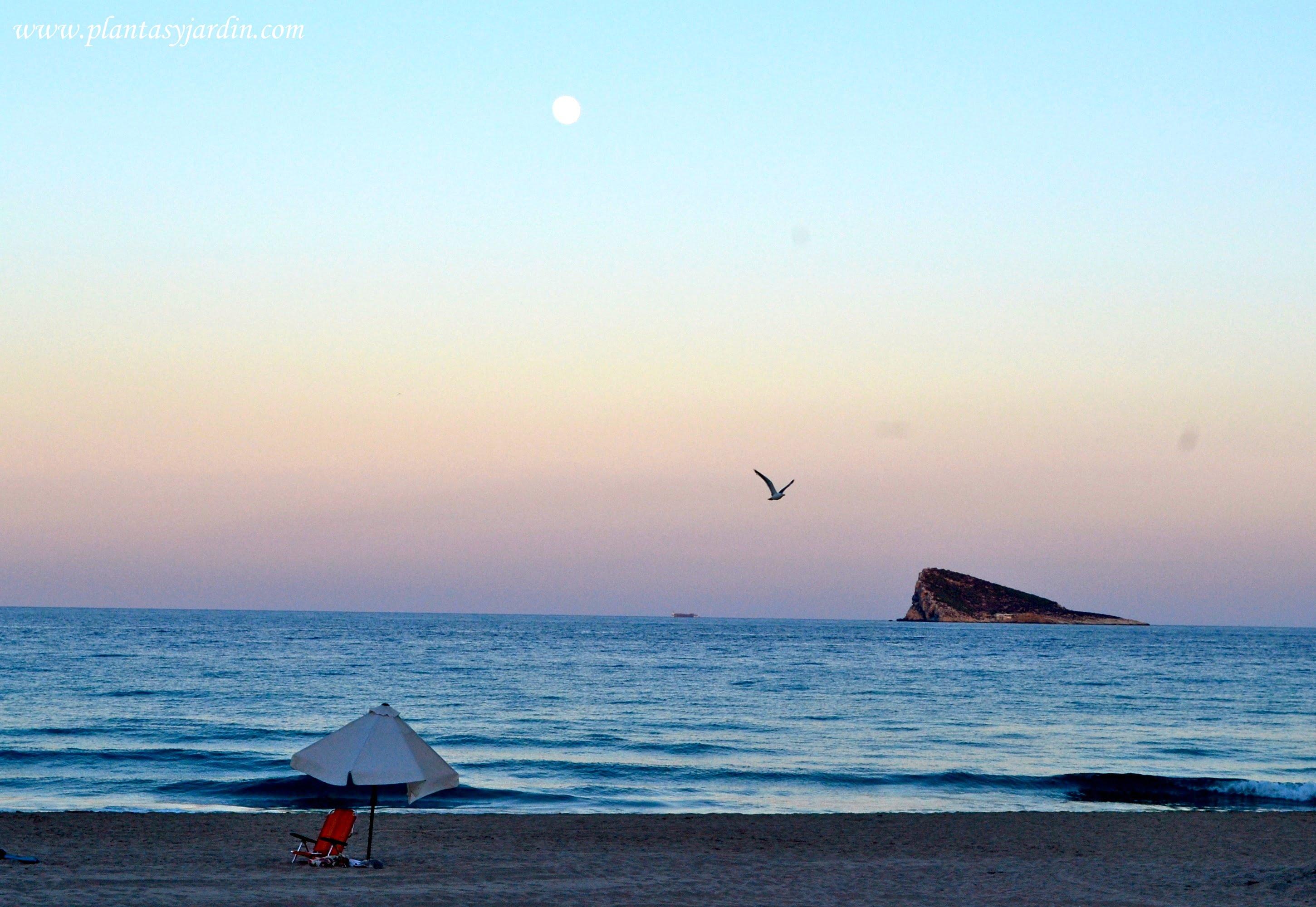 playa del Poniente al atardecer Benidorm
