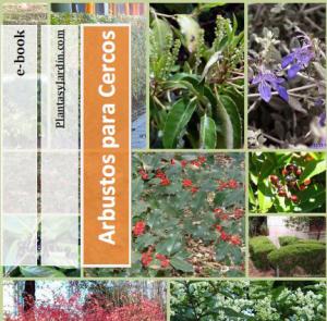ebook arbustos para cercos