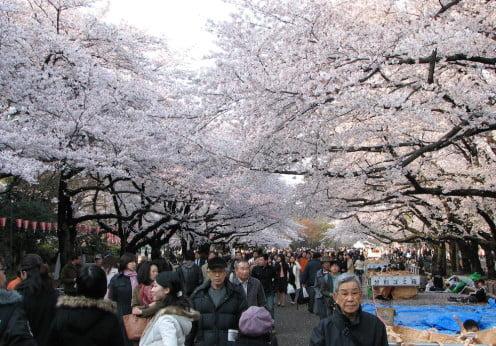 Hanami en Ueno park Tokyo. Foto de Bernard Gagnon Wikipedia