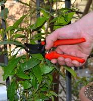 Cómo hacer para que broten las ramas laterales