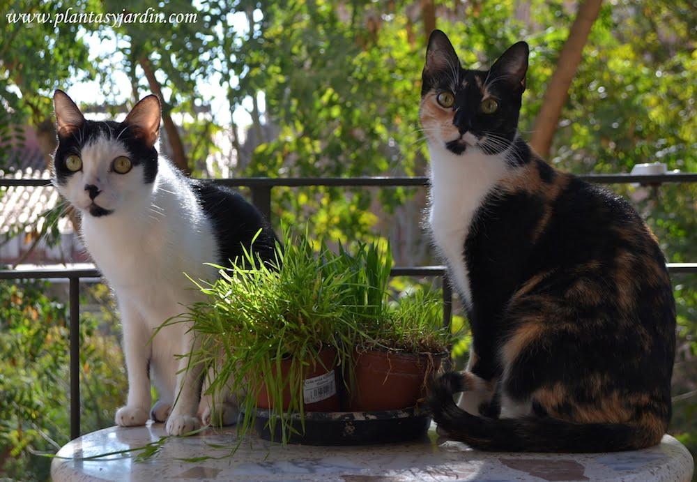 Isis & Osiris junto a su hierba en el balcón