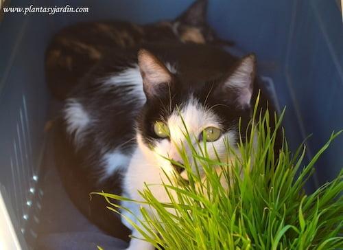 Osiris junto a su hierba para gatos