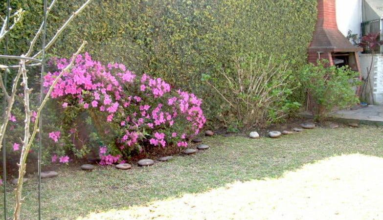 Pared medianera cubierta con Ficus repens, Enamorada del muro