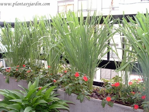 se pueden plantar otras flores para adornar en la misma maceta