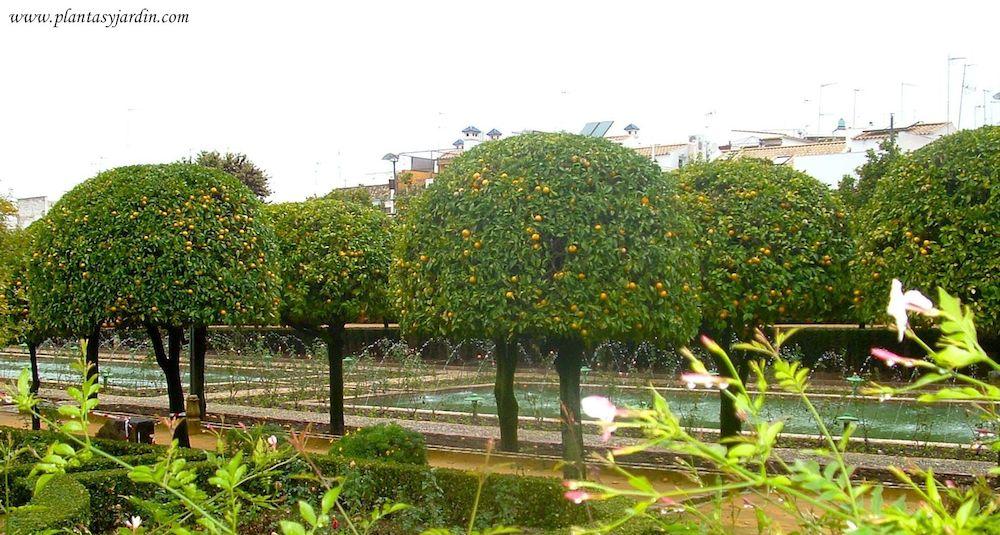 Rboles frutales para peque os jardines plantas jard n - Arboles ornamentales para jardin ...