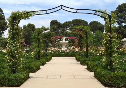 La Rosaleda del Parque del Buen Retiro