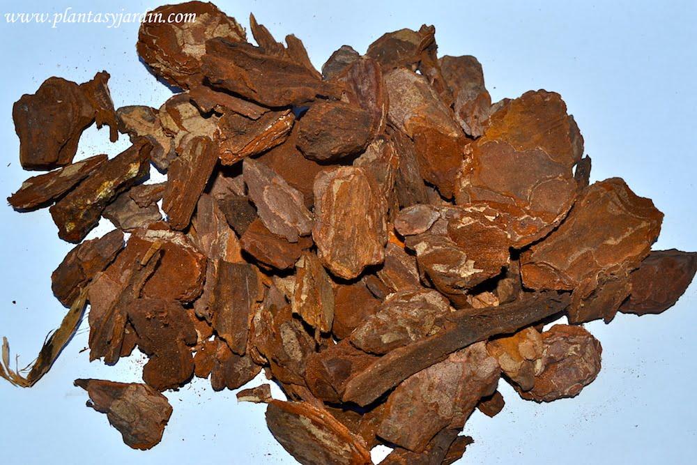 Corteza de pino decorativa