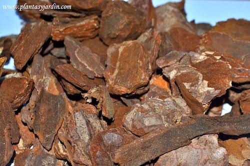 Corteza de madera, de pino o chips
