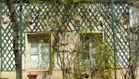 fachada cubierta con treillage o celosía de madera y Jasminum nudiflorum