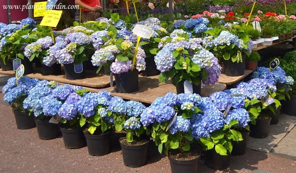 Plantas Con Flores Azules Plantas Y Jardin
