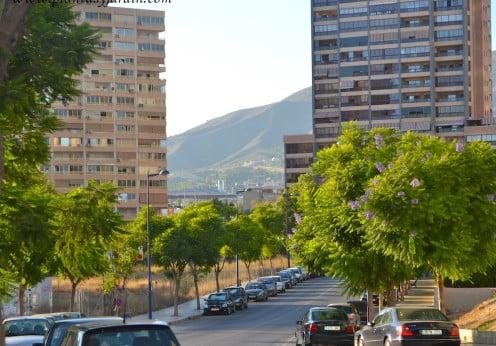 Jacaranda como arbolado urbano en calles secundarias