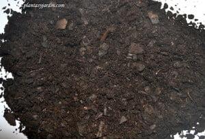 tierra de castaño-terra de castanyer