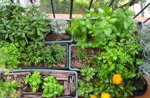 Jardineras con hierbas aromáticas en el balcón: salvia, curry, menta, cilantro, ajedrea, tomillo, ciboulette, perejil, albahaca y Caléndulas