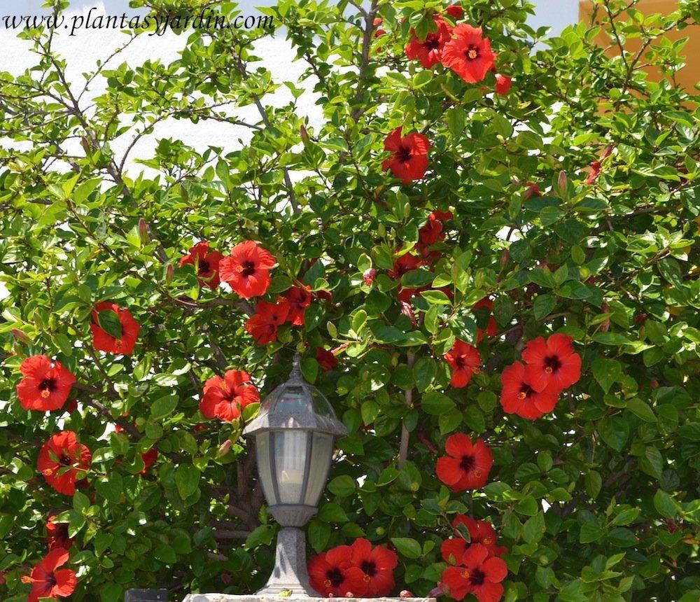 Desear a recomendaci n p rbol peque o con floraci n y - Plantas para pleno sol ...