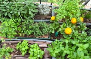 Jardineras con hierbas aromáticas: Salvia, Curry, Perejil, Ciboulette, Tomillo, Ajedrea, Cilantro, Albahaca y Menta