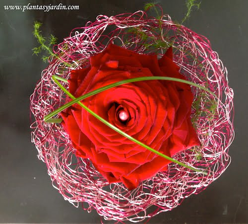 Una rosmelia con pétalos de rosas rojas