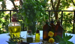 Las propiedades de las plantas medicinales