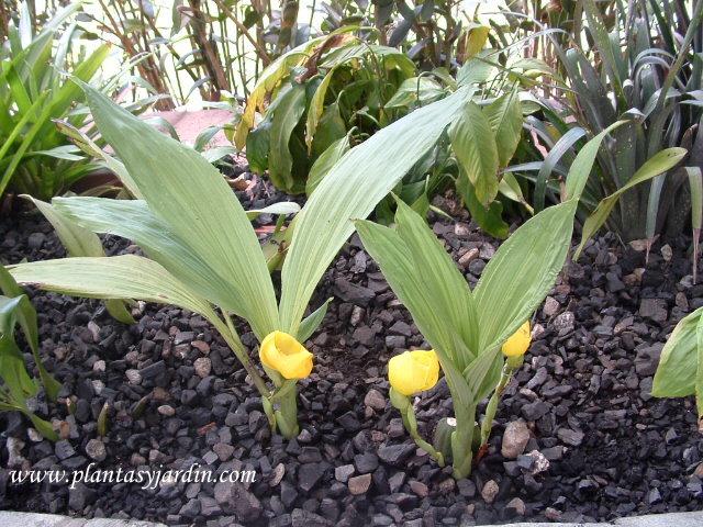 Orquídeas en el Jardín Botánico de Bogotá Celestino Mutis