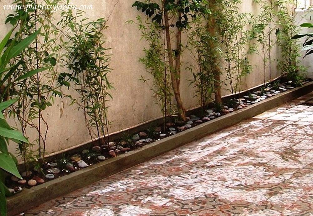 Quisiera saber plantas para canteros pegados a tapiales for Decoracion de patios con piedras y plantas
