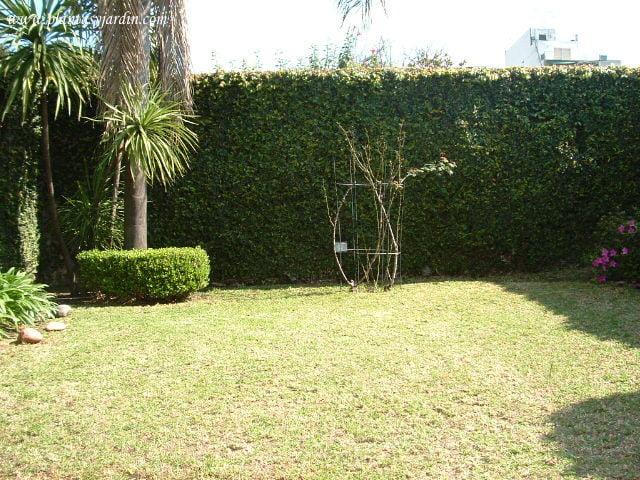 Paredes para jardin les dejamos algunas direcciones en for Jardines en paredes