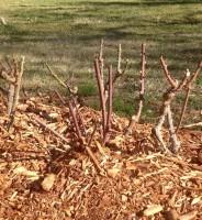 La corteza de pino, al ser ácida, va bien a todas las plantas?
