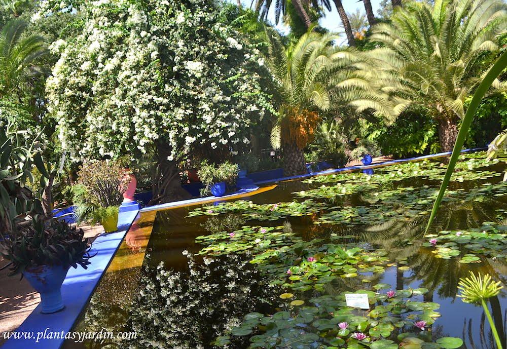 Top 10 de plantas jard n los posts m s le dos del 2015 for Filtros para estanques de jardin