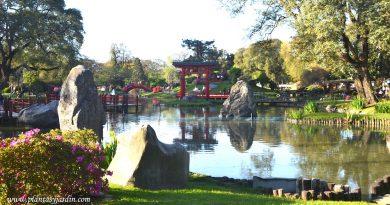 Torii, puentes zigzag y curvo junto al lago del jardín japonés de Buenos Aires