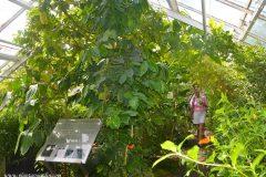 Butterfly house del Hortus Botanicus Ámsterdam