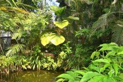 Invernadero con plantas tropicales y estanque interior