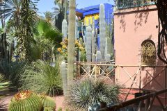 Colección de Cactáceas, incluye 30 especies diferentes en el Jardin de Majorelle