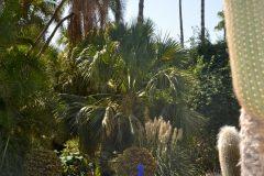 Fuente cuadrada azul en el Jardin Majorelle