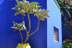 Plantas con formas arquitectónicas y colores primarios decoran el taller del artista