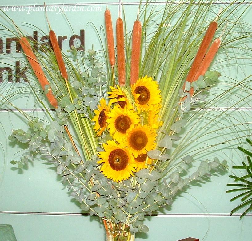Arreglo floral con: totoras y Eucalyptus cinerea