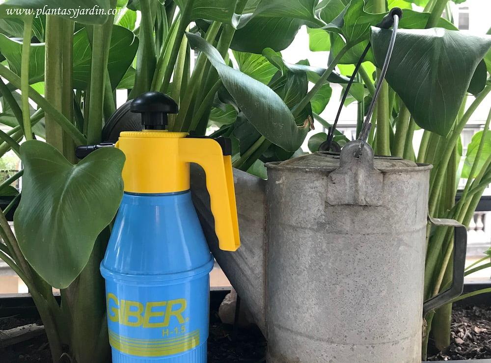 regardera de zinc y pulverizador para fertilizar las plantas